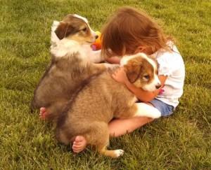 Steve Weber 2014 puppies