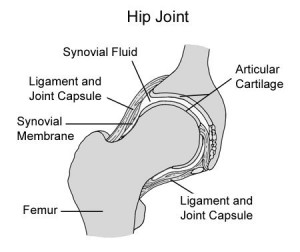 chd1insidejoint